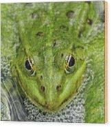 Green Frog Wood Print by Matthias Hauser