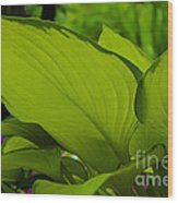 Green Giants Wood Print
