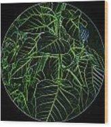 Green Glow Wood Print
