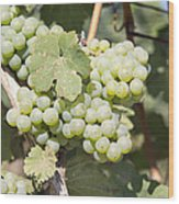Green Grapes Growing On Grapevines Closeup Wood Print