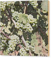 Green Grapes Growing On Grapevines Wood Print