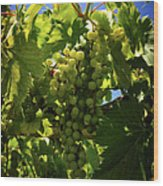 Green Grapes On The Vine Wood Print
