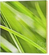 Green Grass Abstract Wood Print