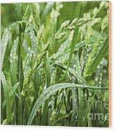 Green Grass After Rain Wood Print