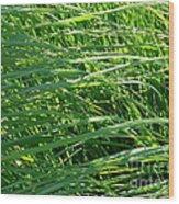 Green Grass Growing Wood Print