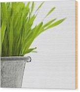 Green Grass In A Pot Wood Print