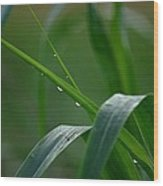 Green Grass Of Summer Wood Print