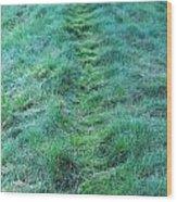 Green Grass Pathway. Wood Print