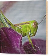 Green Grasshopper I Wood Print