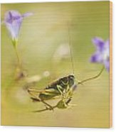 Green Grasshopper On Violet Bell Flowers Wood Print