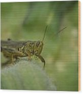 Green Grasshopper You Looking At Me Wood Print