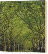 Green Green World Wood Print