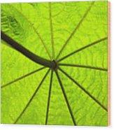 Green Growth Wood Print