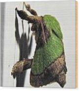Green Hair Moth Wood Print