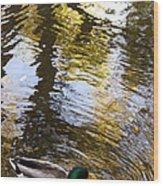 Green Head Mallard Duck Wood Print