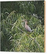 Green Heron 2013 Wood Print