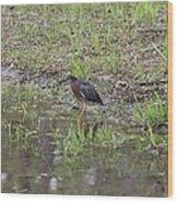 Green Heron Along Shore Wood Print