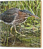 Green Heron And Catch Wood Print