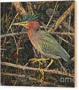 Green Heron Basking In Sunlight Wood Print