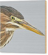 Green Heron Close-up Wood Print