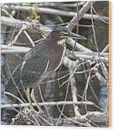 Green Heron In Everglades Np Wood Print