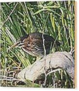 Green Heron - Juvenile Wood Print