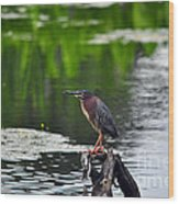 Green Heron Perch Wood Print
