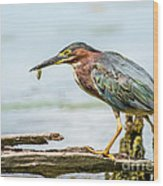 Green Heron Perfection Wood Print