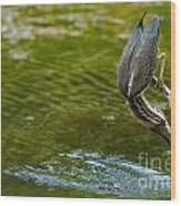 Green Heron Pictures 414 Wood Print