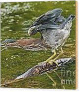 Green Heron Pictures 522 Wood Print