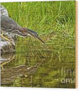 Green Heron Pictures 534 Wood Print