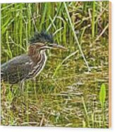Green Heron Pictures 545 Wood Print