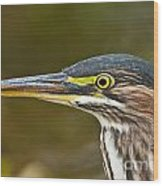 Green Heron Pictures 548 Wood Print