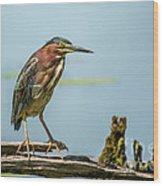 Green Heron Pose Wood Print