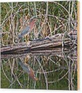 Green Heron Reflections Squared Wood Print