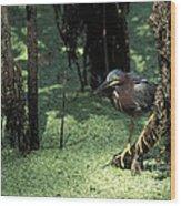 Green Heron Wood Print by Steven Ralser