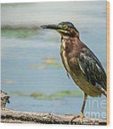 Green Heron Tongue Wood Print