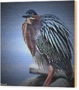Green Heron Vignetted  Wood Print