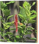 Green Hummingbird On Red Hibiscus Flower 2 Of 10 Wood Print
