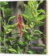 Green Hummingbird On Red Hibiscus Flower 5 Of 10 Wood Print