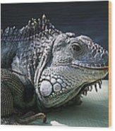 Green Iguana 1 Wood Print