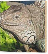 Green Iguana Face Wood Print