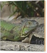 Green Iguana Lizard Wood Print