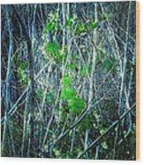 Green In Winter Wood Print
