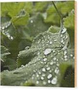 Green Leaf And  Fresh Water Pearl Wood Print