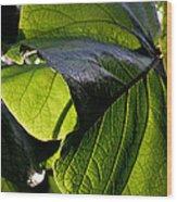 Green Leaf I Wood Print