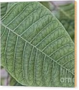 Green Leaf Macro Wood Print