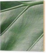 Green Leaf Up Close 2 Wood Print