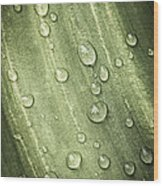 Green Leaf With Raindrops Wood Print