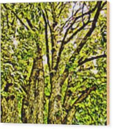Green Leafy Trees Wood Print